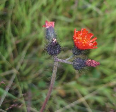 80_kwiatek.jpg