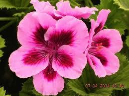 Imagenes con pensamientos para reflexionar Imagenes  - Imagenes De Flores De Pensamiento