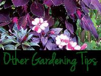 General Gardening Tips