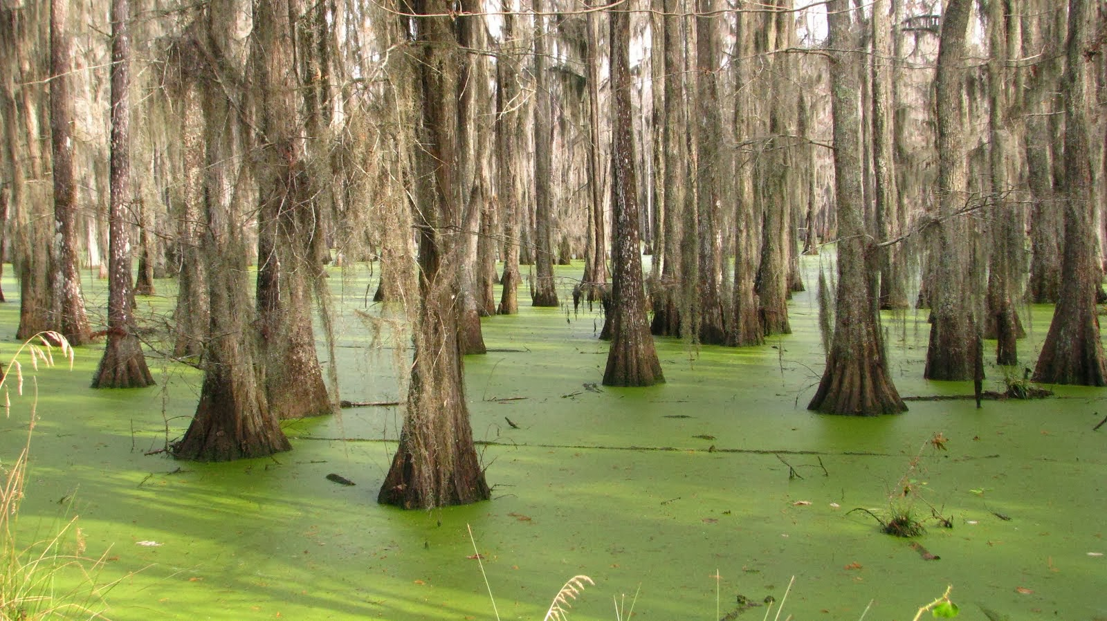 Halfway Swamp, South Carolina BEFORE THE FLOOD OF 2015