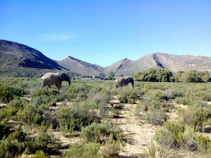 La Böcöque. Aventuras en Sudáfrica. elefantes