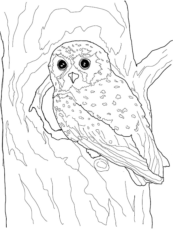 These are some Owl Coloring Pages for you and your kids to enjoy! title=