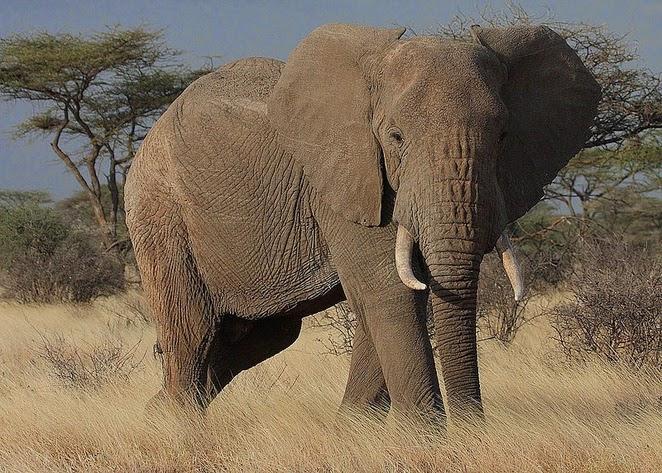 Elephant Junkies