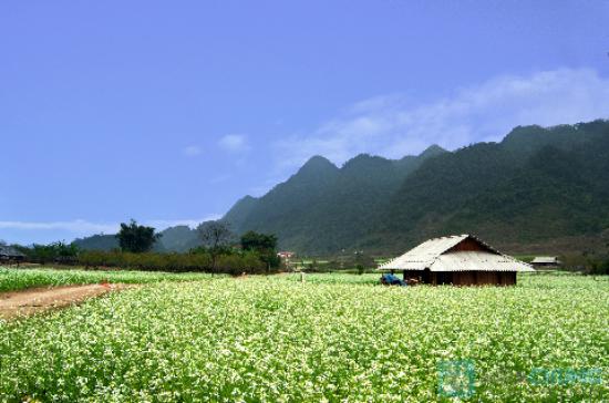 Cho thuê xe du lịch 16 chỗ đi Mai Châu - Hòa Bình
