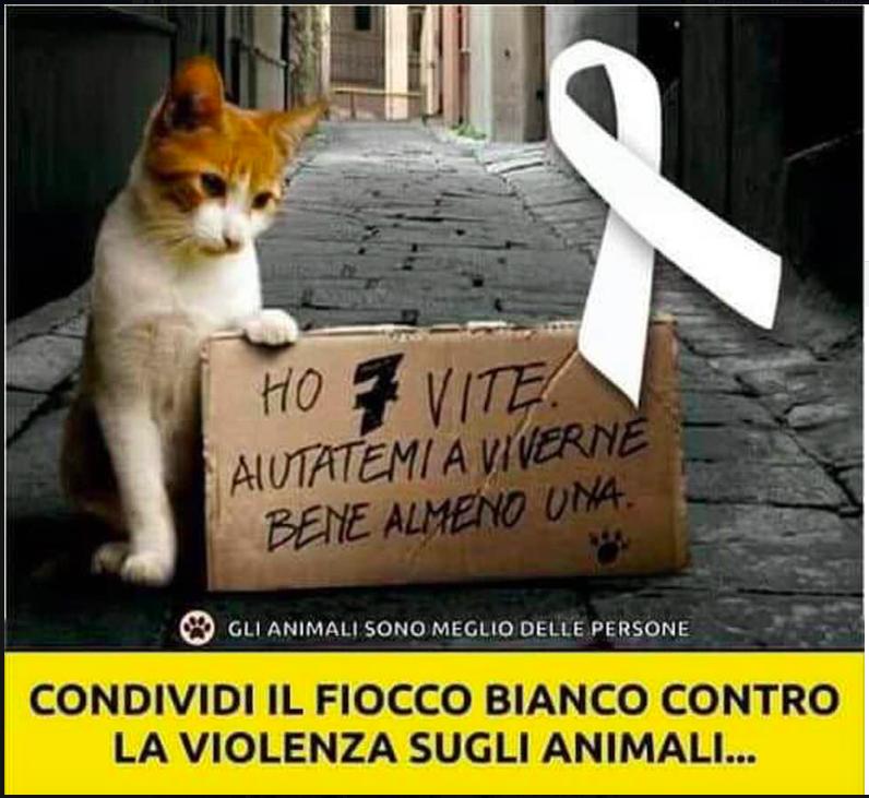 no alla violenza sugli animali