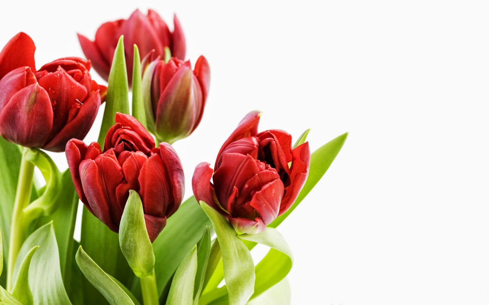 Very Beautiful Flowers Wallpapers Free All Hd Wallpapers