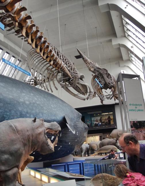 Grandes mamíferos en el Museo de Historia Natural