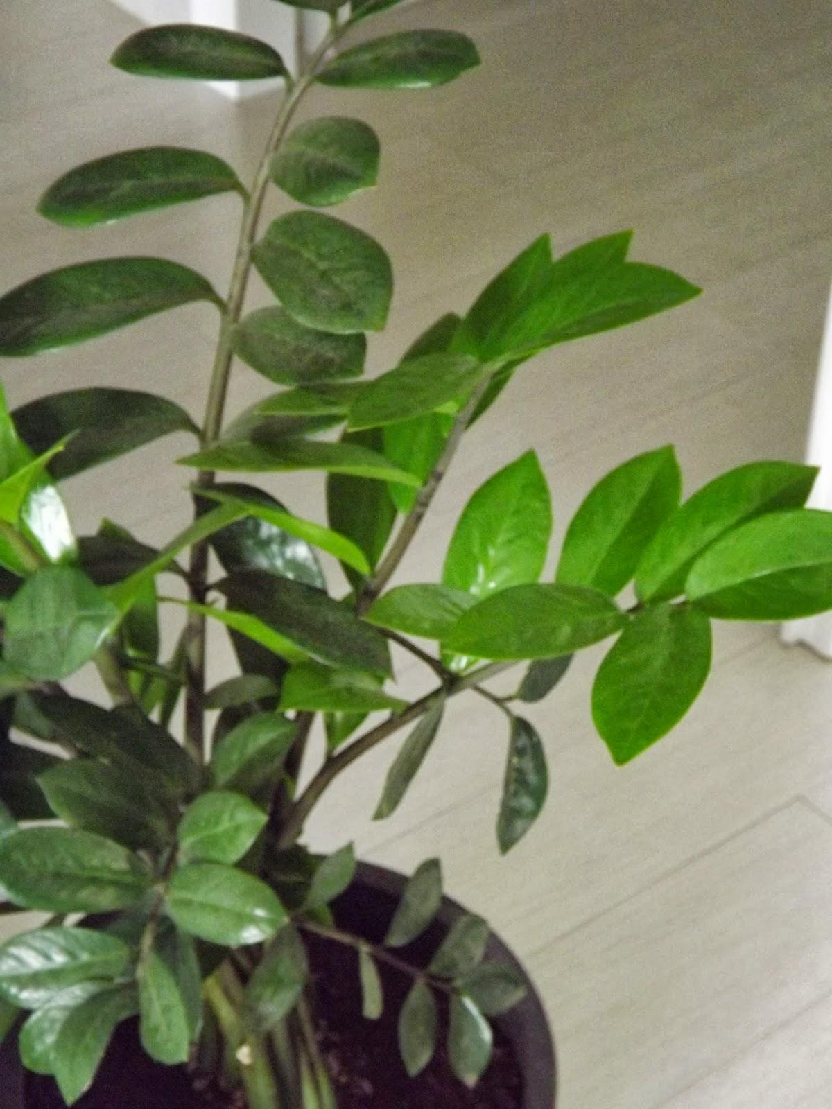 Un vergel en la ciudad plantas verdes for Plantas verdes de interior