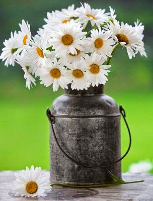 shasta daisies in vintage milk can