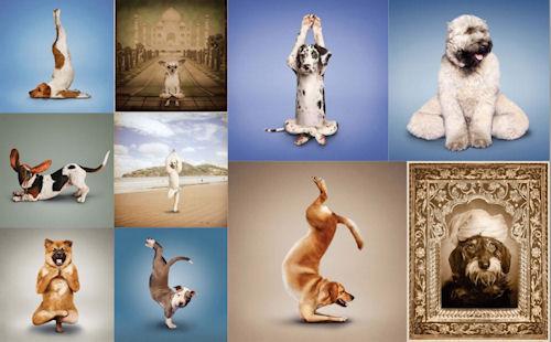 10 fotografías de perros haciendo posiciones de yoga