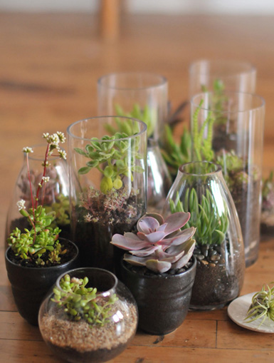 Belle Maison Terrariums Mini Indoor Gardens