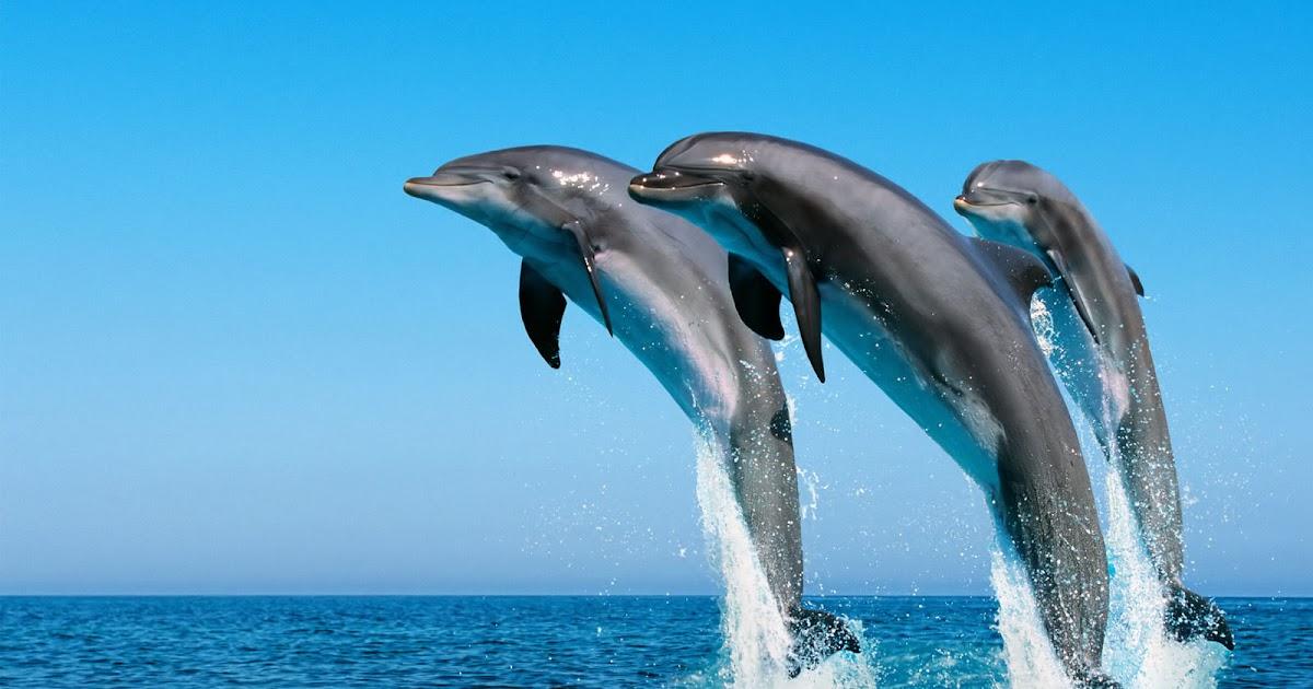windows 1 0 wallpaper dolphin - photo #3