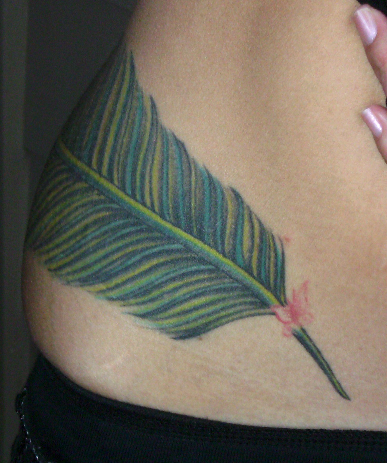 Feather Tattoos On Ribs For Girls   New Collection