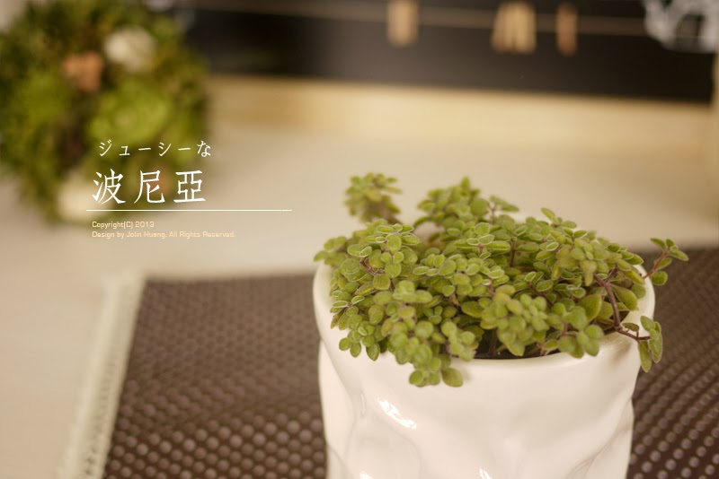 波尼亞Crassula browniana
