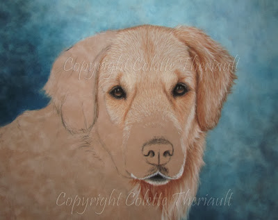 pet portrait of Golden Retriever dog painting in progress
