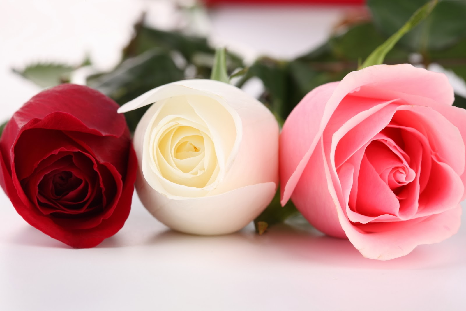 White And Red Rose Meaning