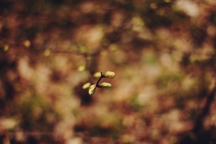 bokeh, nature photography, bokeh phototgraphy