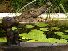 Resident crocodile in our Bali garden