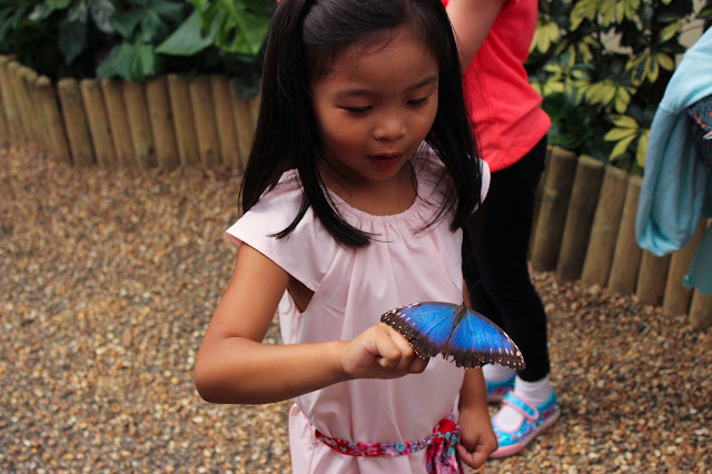 Butterfly Exhibition | NHS UK | Chichi Mary Kid's Boutique