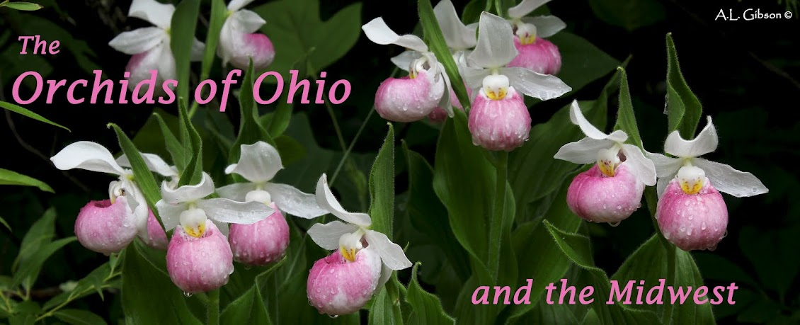Orchids of Ohio and the Midwest