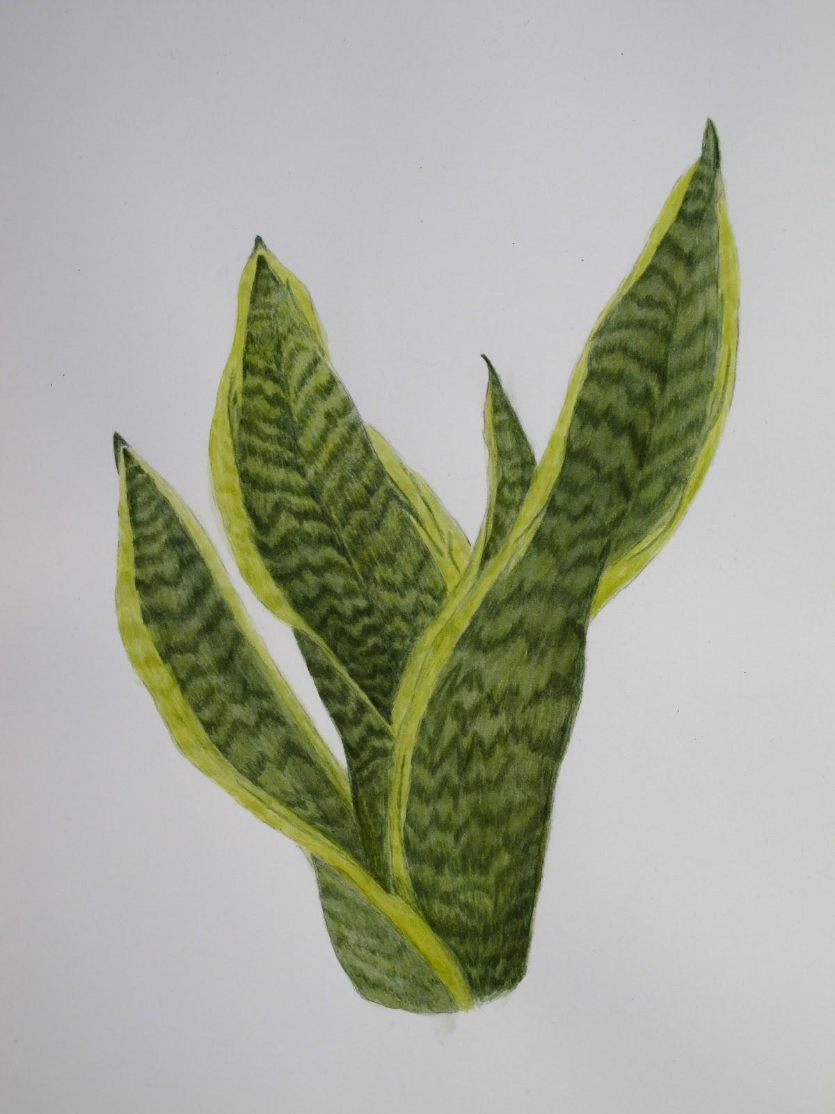 Drawing Botanical Illustration Leaf | Free Printable Math Worksheets ...