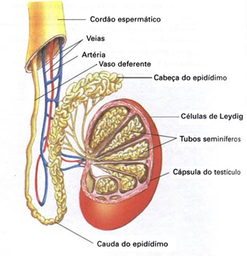 Biologia no Vestibular: (Unicamp) - Reprodução Humana