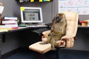 foto lucu monyet jadi bos
