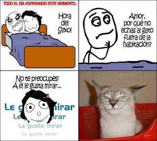 Viñeta Meme Cuanto cabron yaoming gato