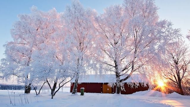 Beautiful Winter Landscape Snowy Trees House Sunlight HD Wallpaper