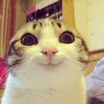 Suscríbete si este gato te intimida.