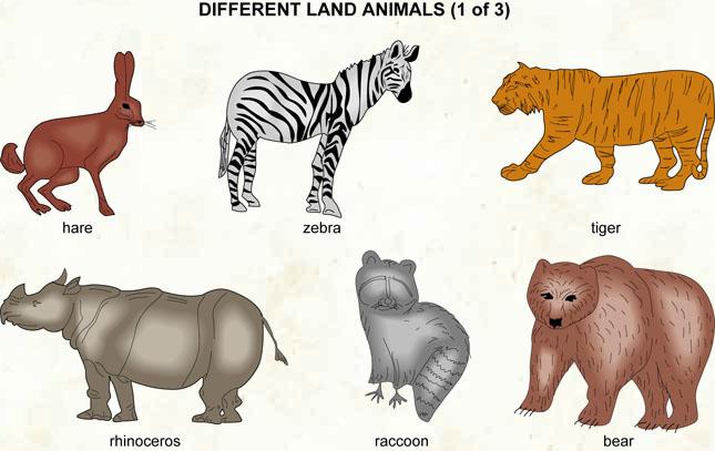 Hayvanları Eşleme Oyunu Oyna