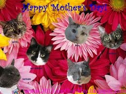 Happy Mother Day Funny Flower Picture