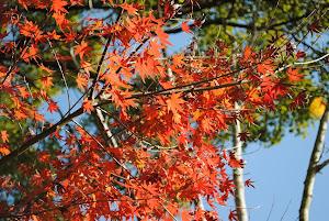 田舎物件の紅葉