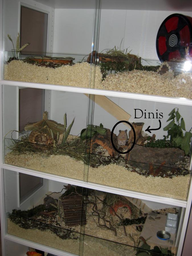 naturnahe hamstergehege ein pax f r dinis. Black Bedroom Furniture Sets. Home Design Ideas