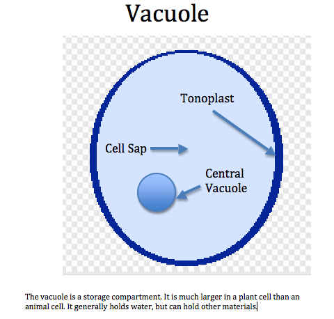 animal cell vacuole diagram - photo #1