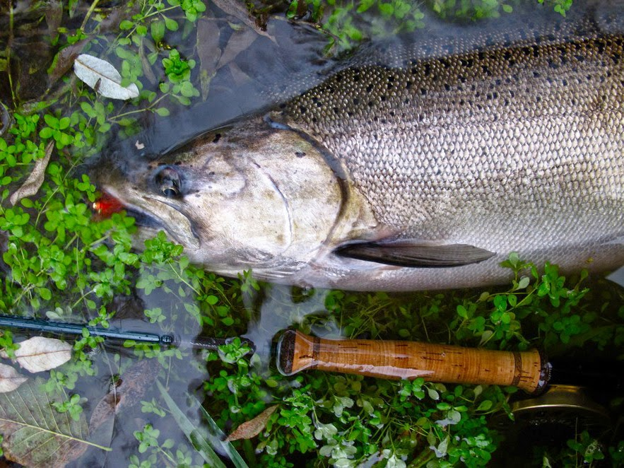kandungan protein ikan