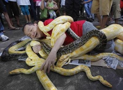 bermain dengan ular sawa