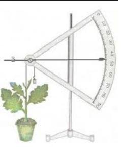 pengukuran menggunakan auxsanometer