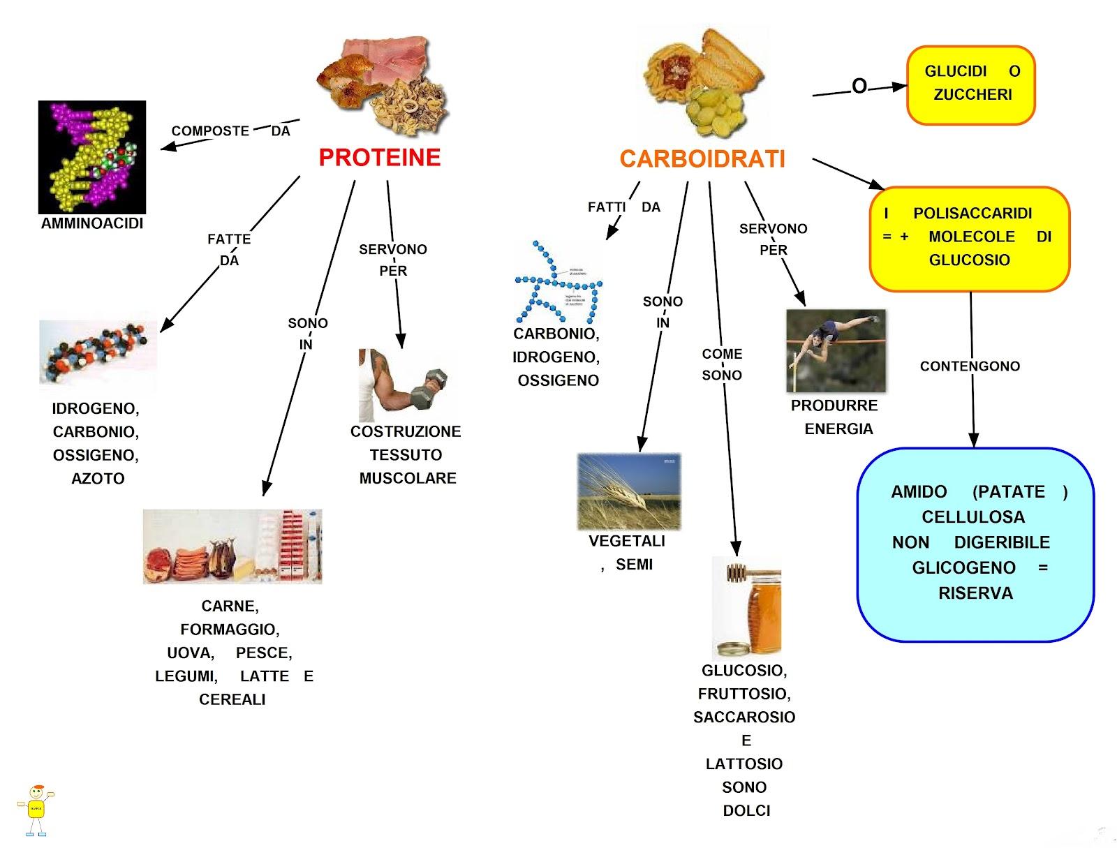Mappa Concettuale Proteine E Carboidrati Scuolissima Com