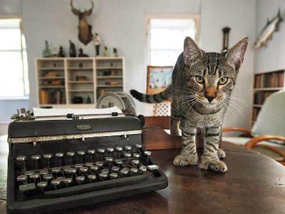 5 Surga Wisata Bagi Penggemar Kucing