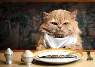 ração gato