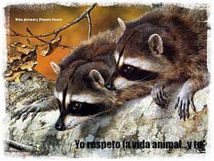 yo respeto la vida animal... y tú?