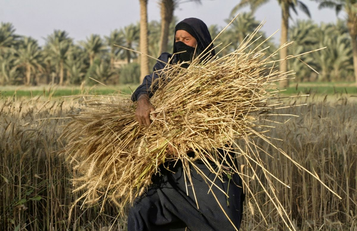 http://www.businessinsider.com/r-exclusive-islamic-state-militants-seize-wheat-from-state-silos---iraq-grain-board--2014-13