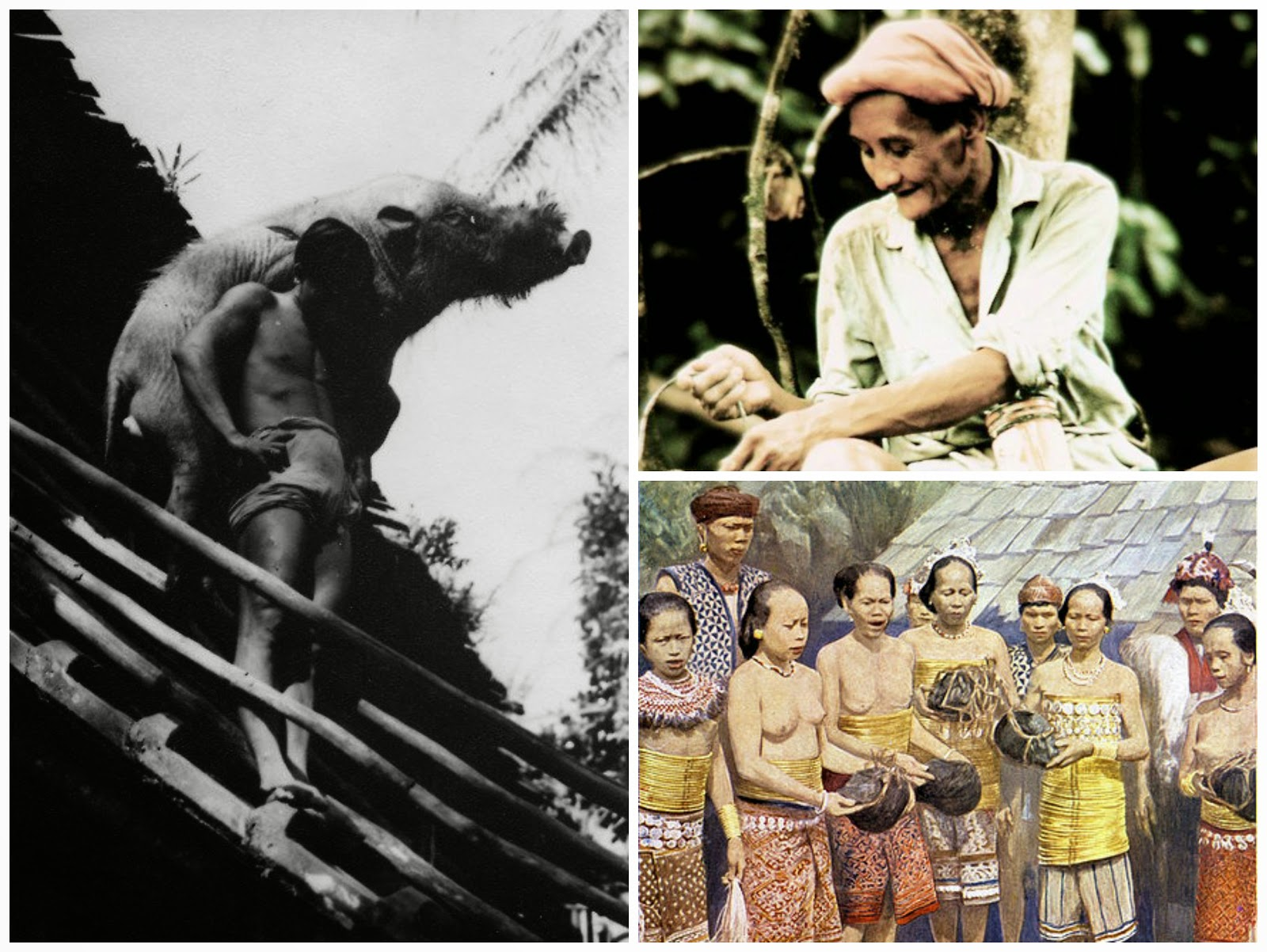 ✿ kingdom of sarawak ✿ ✿ head hunters kingdom of sarawak ✿ upon arrival at its main entrance their longhouses they would shout as loudly heart as a warning indicating they have reached and it will also be rewarded