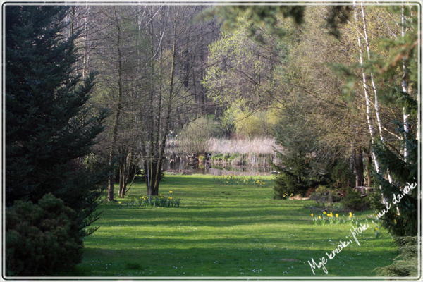 Wiosna w ogrodzie. Spring in my garden.