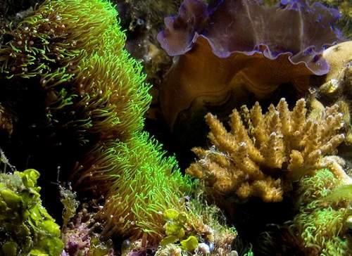 Image of saltwater aquarium