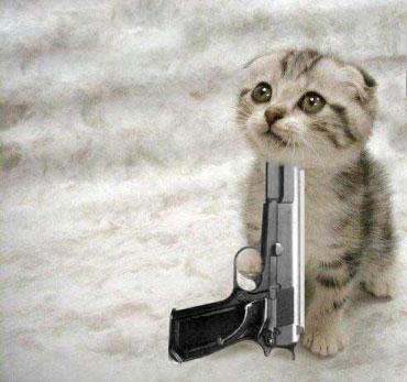 Funny Cats With Guns Wallpapers