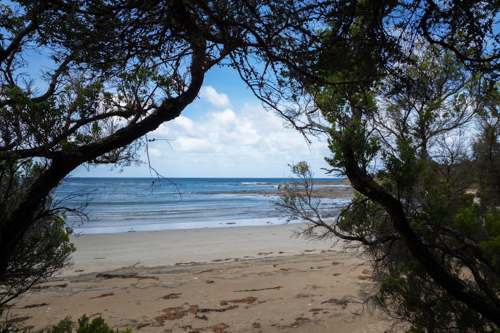 blanket bay beach through trees