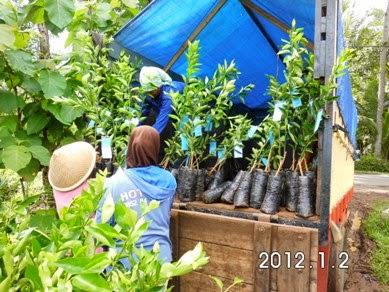 Pengiriman Bibit ke Seluruh Indonesia