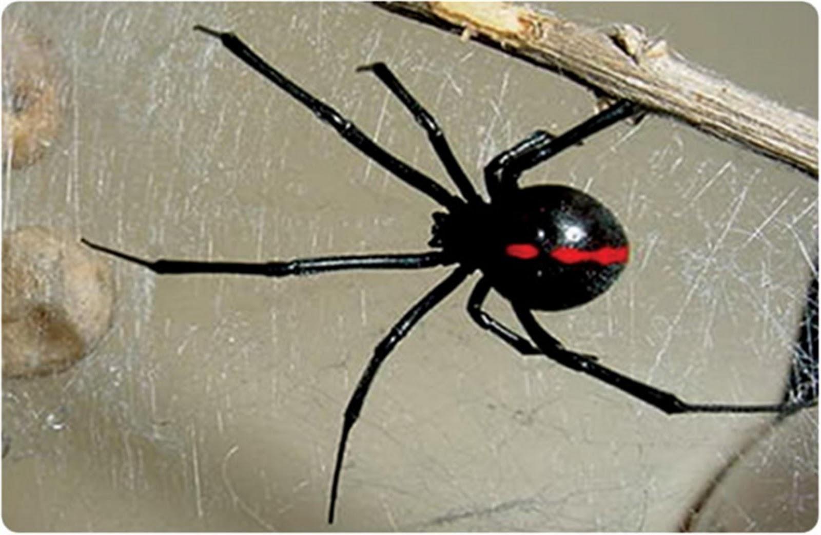 El refugio las 10 especies m s venenosas del mundo - Insectos en casa fotos ...
